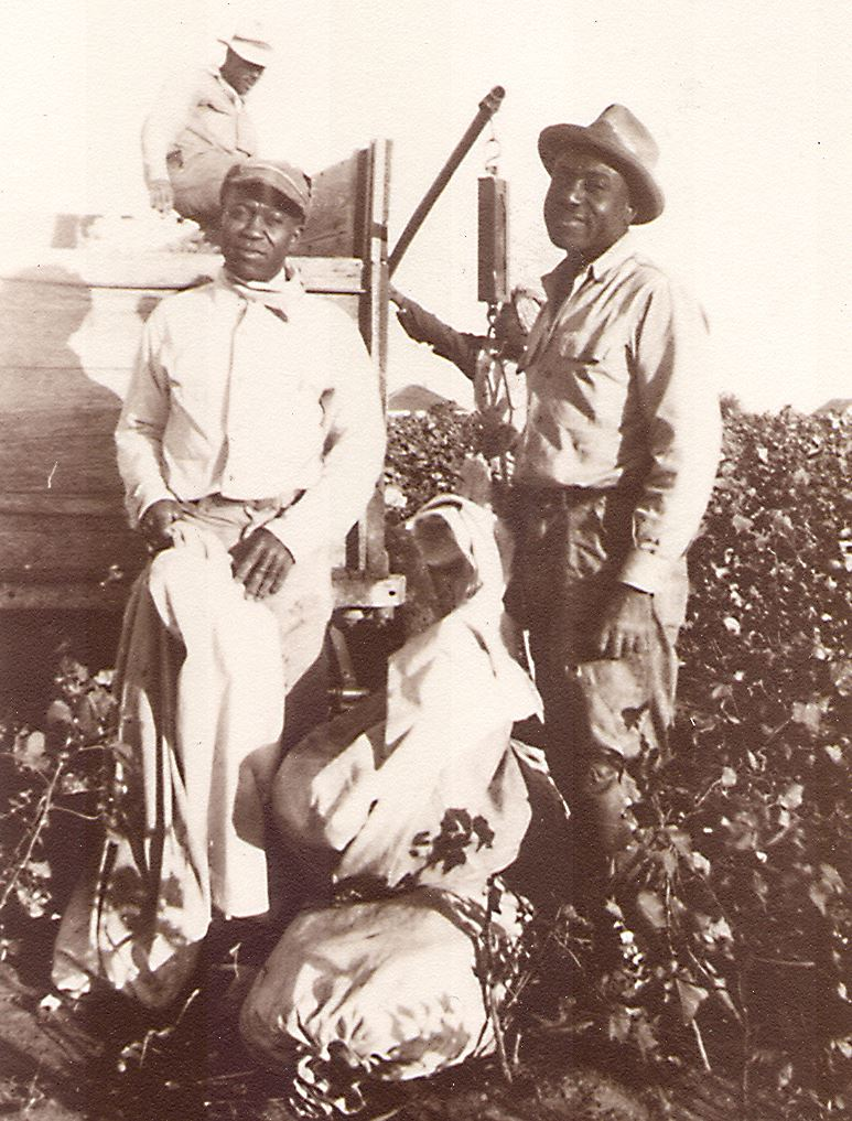 Weighing Cotton Sacks in the Fields