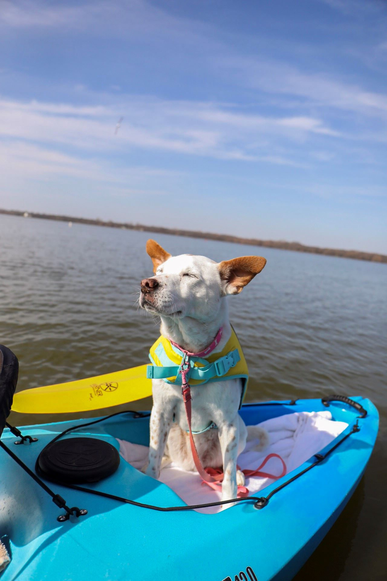 Puppy riding in a kayak on the water